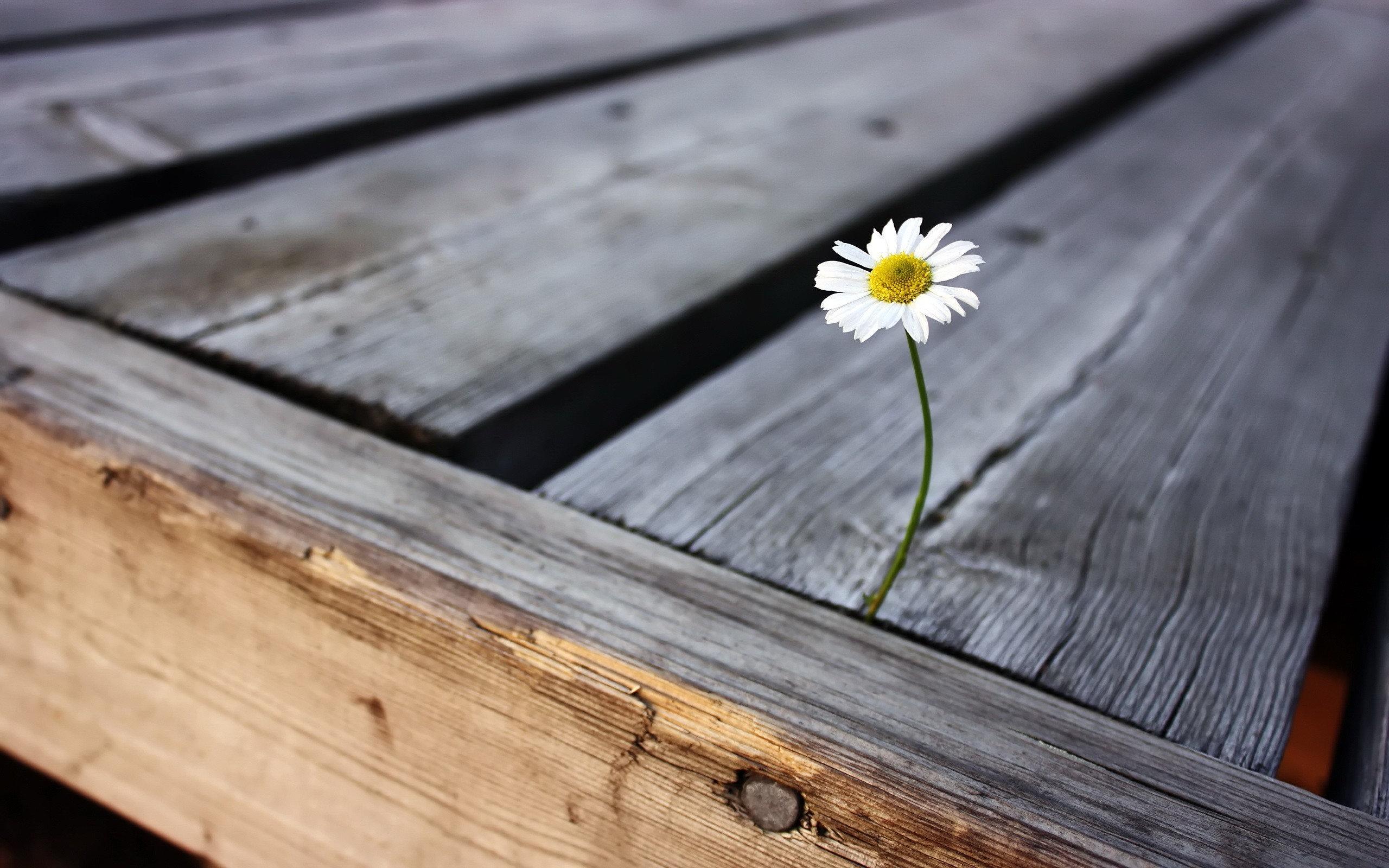 Цветы жизни 1 рассказы 6 фотография