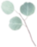 small eucalypt-01.png