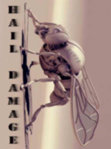 Hail_Damage.png