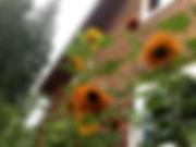 IMG_3772_edited.jpg