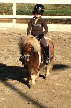 poney pertuis