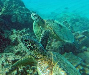 turtle-21914M.jpg