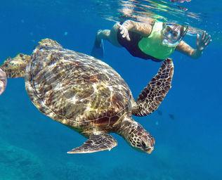 turtle-12314c.jpg