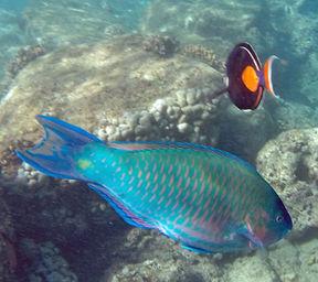 fish-12214g.jpg