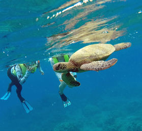 turtle-12714a.jpg