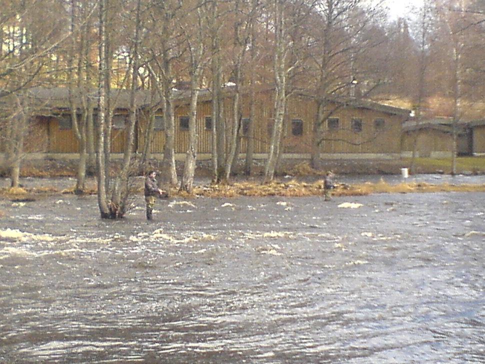 Fliegenfischen Mörrum Svängsta