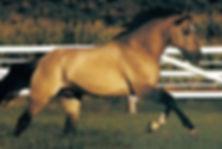 Blazer Stallion