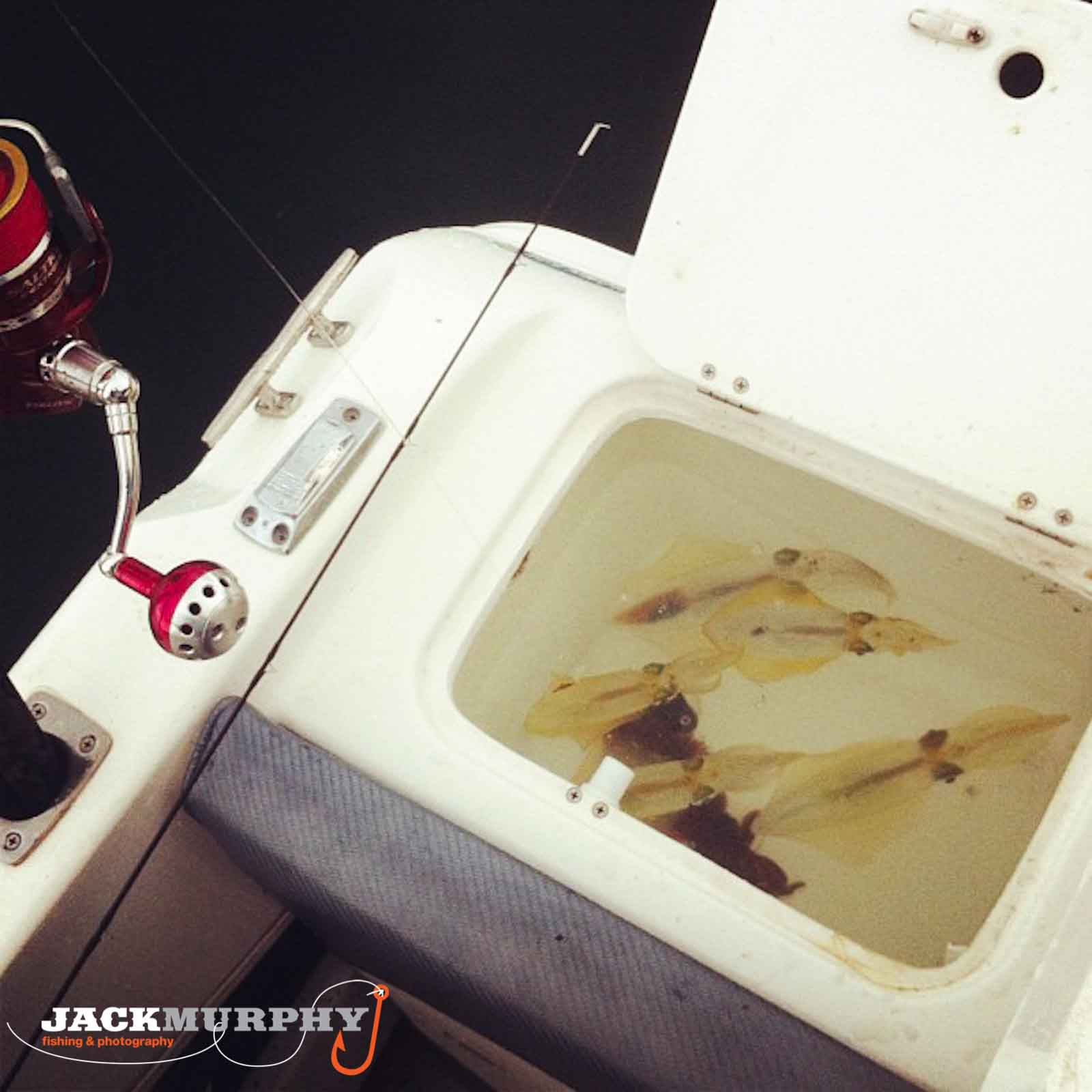 how to plumb a live bait tank