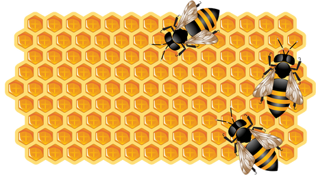 Honey Bee Pollination Services | Miles Apiaries, Inc ...