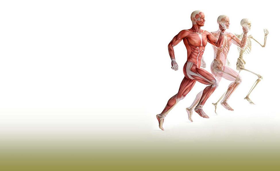 back pain lethbridge muscle joint knee hip shoulder wrist elbow neck