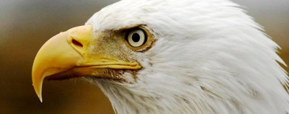 8 eagle portrait.JPG