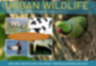 Urban Wildlife A5 Flyer front.jpg