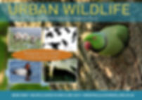 Urban Wildlife A5 Flyer front v1.jpg