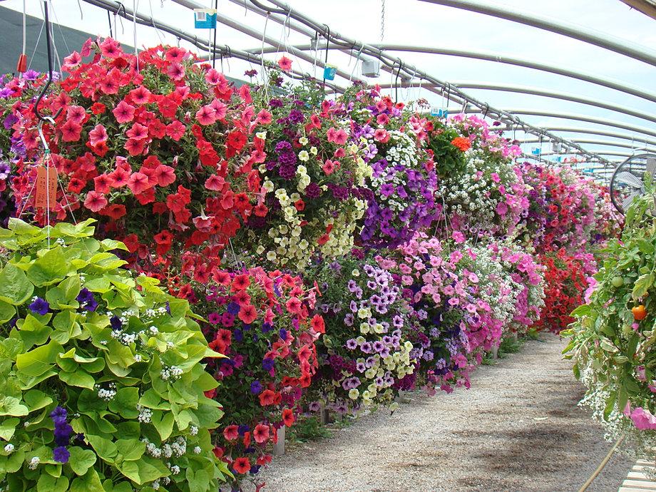 Flower Hanging Baskets Sale : Garden gateway logan utah hanging baskets