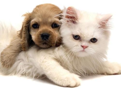 Как отучить кошку мяукать дрессировать кошку не мяукать