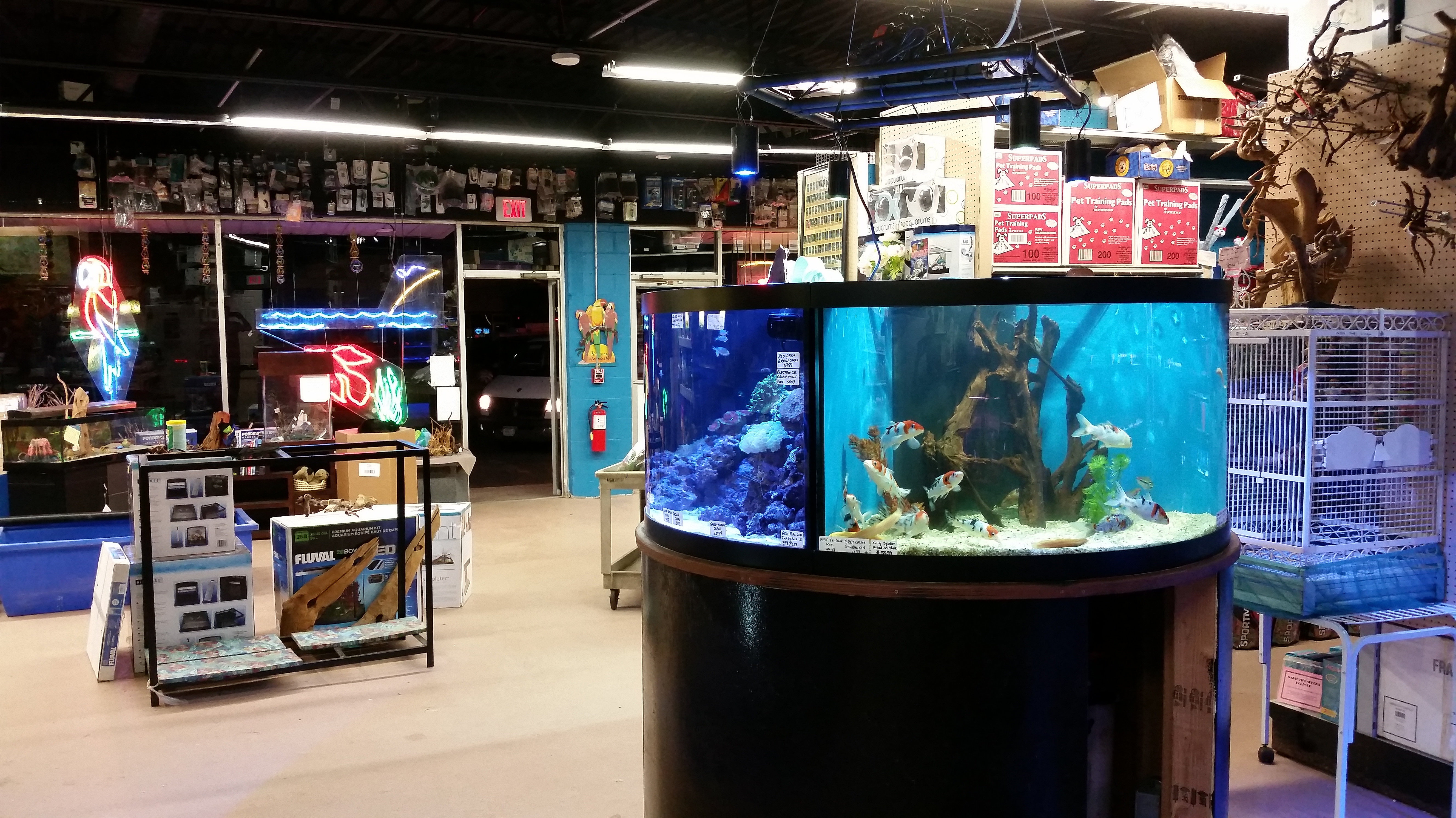 Freshwater fish store near me - 20141105_171859 Jpg