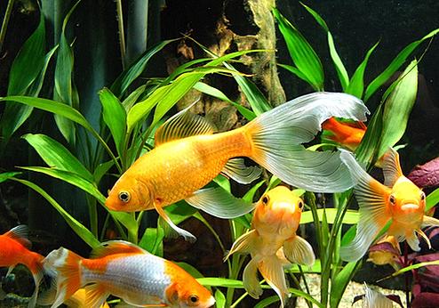 термобелье вполне к чему снится девушке собирать аквариумные рыбки должно быть без