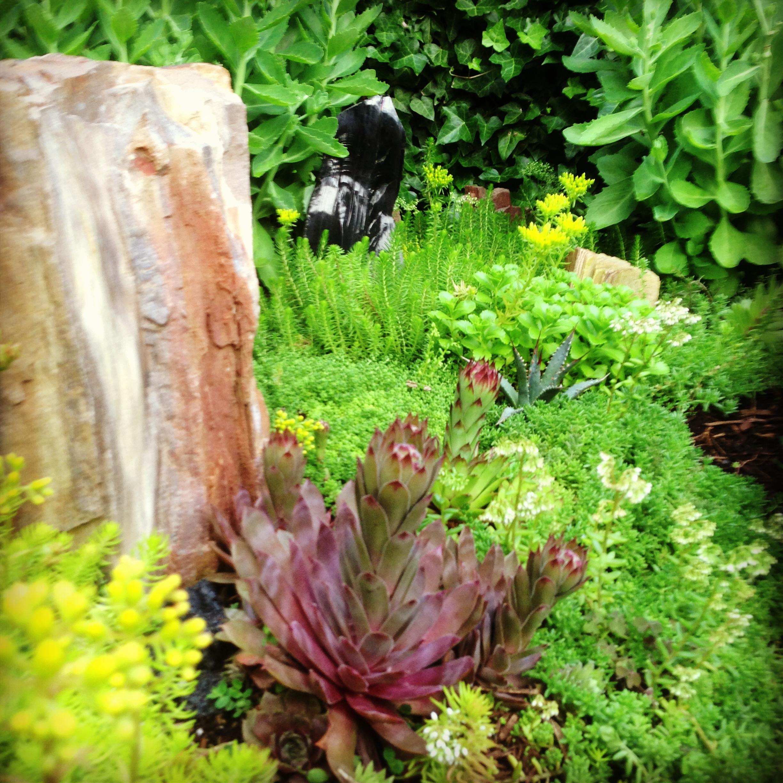 How to Make a Rock Garden in a Trough