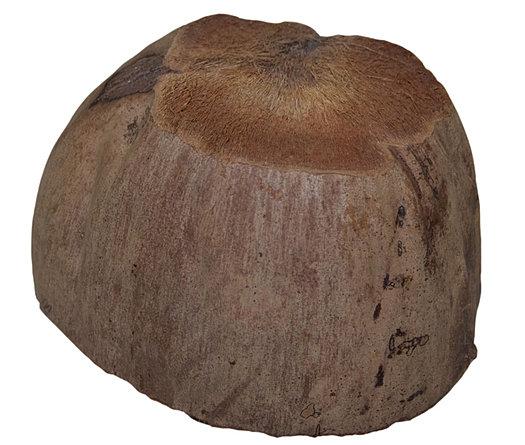 """Résultat de recherche d'images pour """"brosse coco"""""""