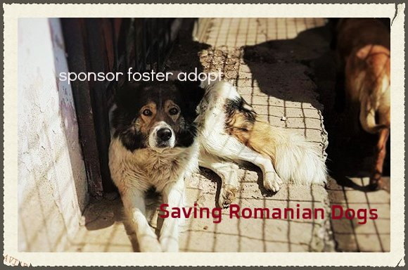 Rescue Dog Pictures Somerset