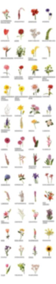 fioreria lugano fiori svizzera