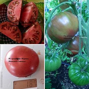 Сорт помидор подарок коммерсанта 59