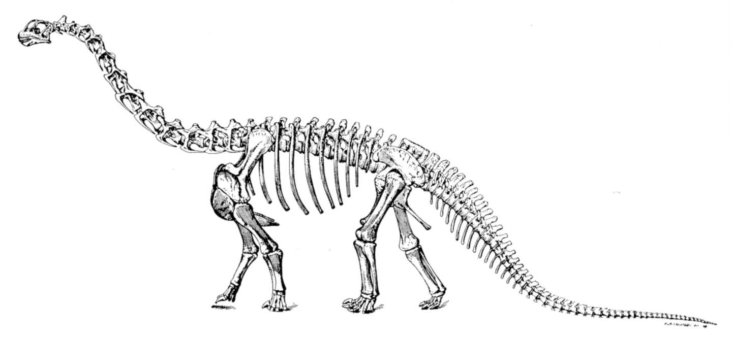 La historia detrás del mito de los dos cerebros de dinosaurio | ADN ...