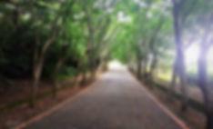 清華大學散步秘境楓林小徑
