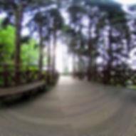 阿里山_阿里山森林遊樂區_森之道05.jpg