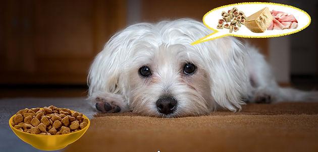 Rifiuto Del Cibo Cosa Fare Quando Il Cane Non Mangia 5 Semplici E
