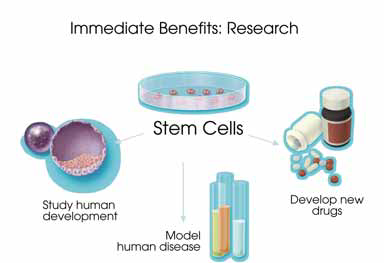 the advantages and disadvantages of using stem cells in health researches Stem cell research, a contentious topic, is again in the news these days but mostly, on a positive note researchers reported that they have discovered a way to create human stem cells using only chromosomes.