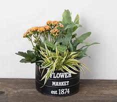 7in Flower Market Planter.jpg