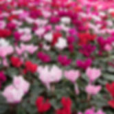 IMG_5049_edited.jpg