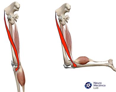 Lesiones Del Musculo Sartorio | Deepthroaters