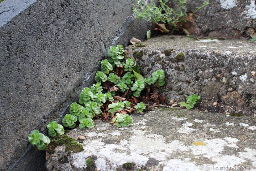 Rocaille de l\'escalier de la terrasse | Le petit jardin des vignes