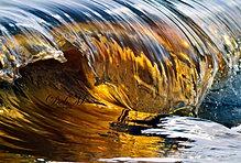 golden rollover 100212
