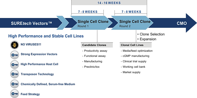 Clonal Cell Line in as little as 14 weeks