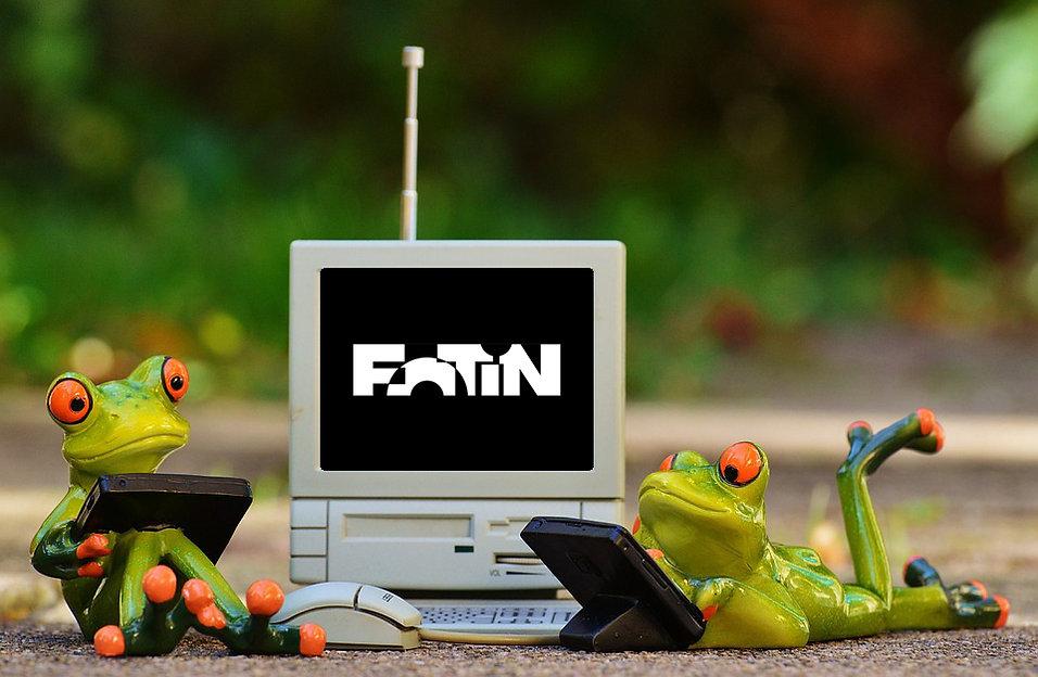 frogs-1037853_960_720_proc.jpg
