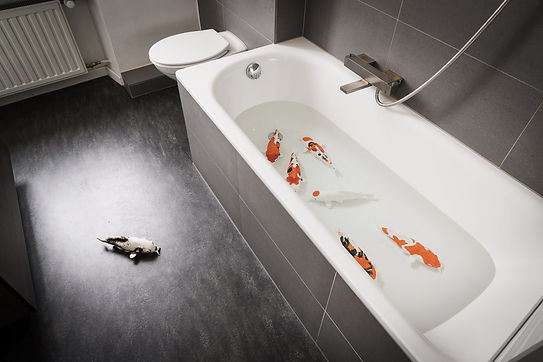 Koi Bathroom