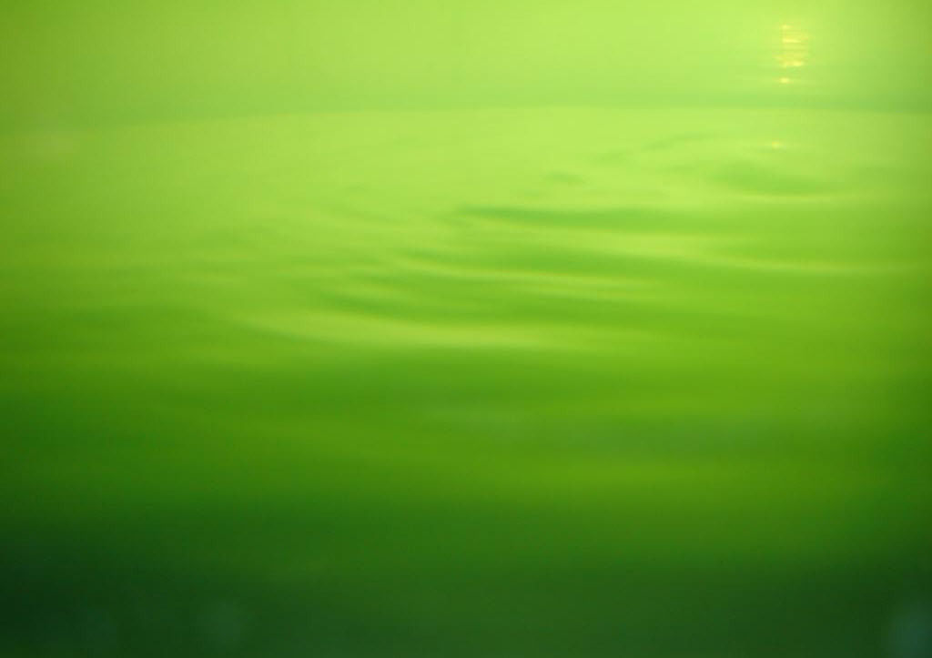 simple green background1279.jpg