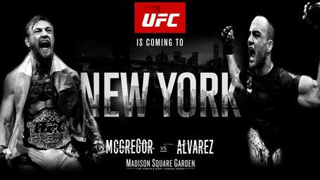 UFC-205.jpg