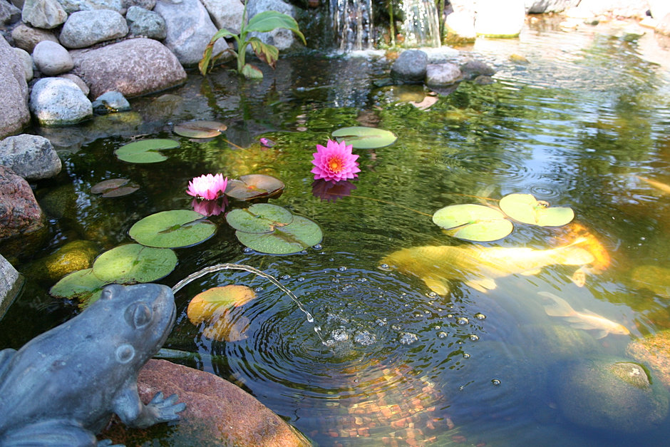 The Healthy Pond Home Welcome To Our Website