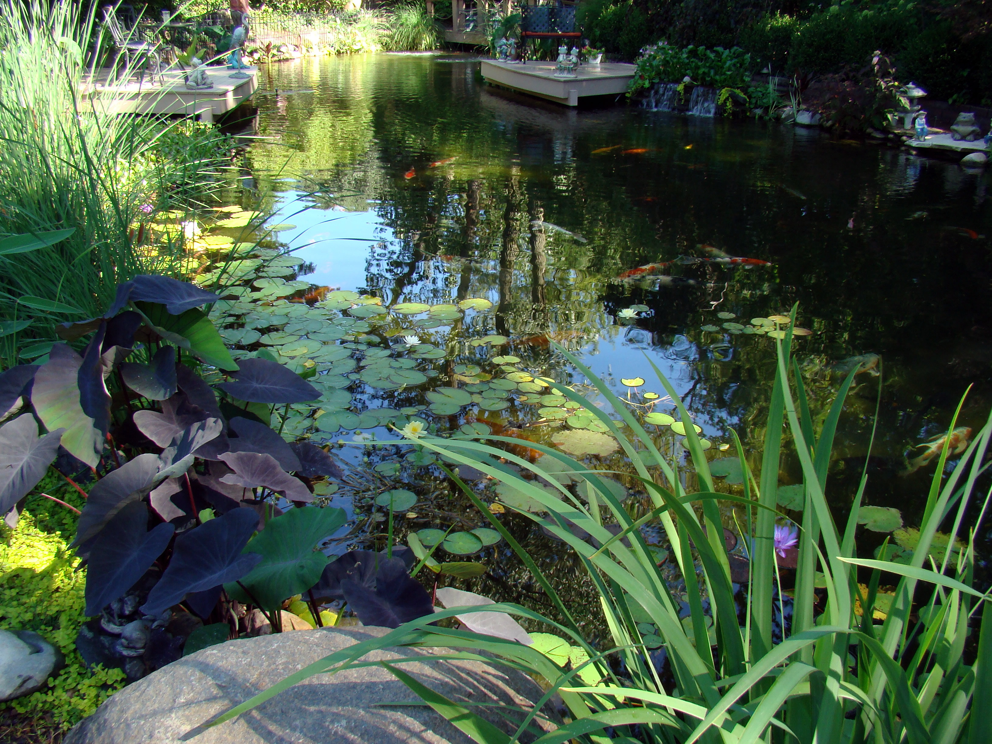 The Healthy Pond Pond Maintenance Koi Fish Health