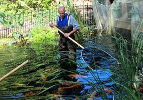 The healthy pond pond maintenance for Pond service
