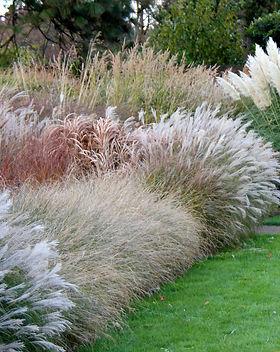 capegardenonline-nursery-grasses.jpg
