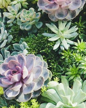 Capegarden-online-nursery-succulents.jpg