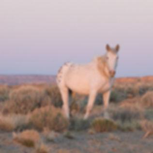 Marni-Grossman-Photography-Wild-Horses-T