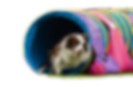 tunnel Yab nationals 2018.png