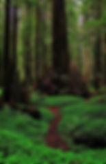 foresta.jpg