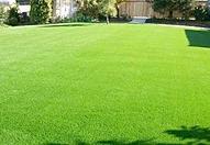 Lawn Turf Leicester